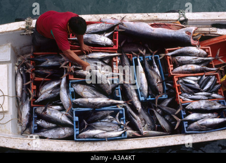 Déchargement de l'attraper - Mancora, Piura, Pérou Banque D'Images