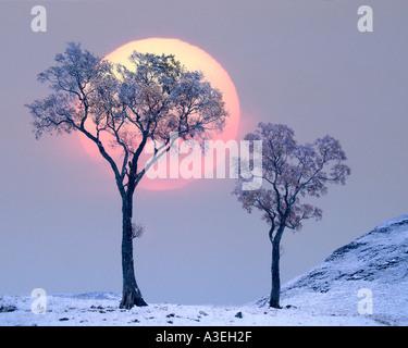 GB - Ecosse: l'hiver dans la région de Glen Lochsie Banque D'Images