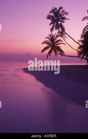 Palmiers sur la rive calme à l'aube en Maldives Banque D'Images