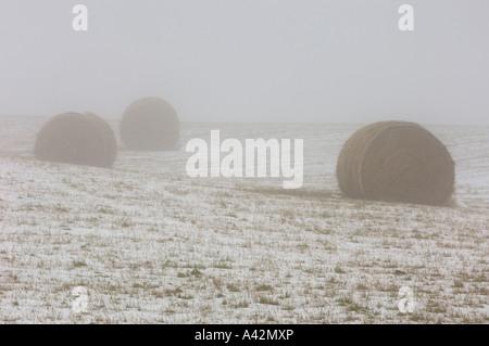 Rouleaux de foin dans le brouillard dans les pâturages enneigés, de Sundre, en Alberta, Canada Banque D'Images