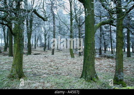 Frosty woodland, Wyming Brook, Hallam Moors, Sheffield, Royaume-Uni Banque D'Images