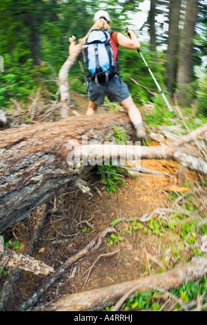 Female hiker enjambant arbre tombé, Pacific Northwest Banque D'Images