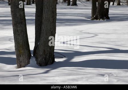 Les ombres des arbres et de la neige dans l'Interstate I 75 halte au Michigan Banque D'Images
