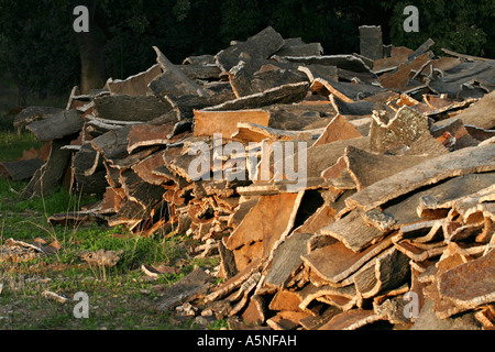 Écorce de Liège Liège séchage dépouillé de l'entourant les arbres de chêne-liège sont empilés à sec en fin d'après Banque D'Images