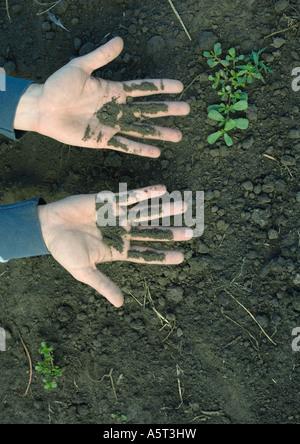 Man's hands recouverts de terre Banque D'Images