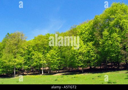 Pré Vert entouré par de beaux arbres verts dynamique Allemagne Eifel