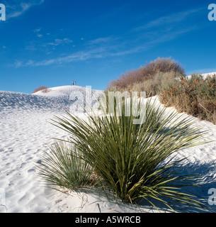 White Sands National Monument, Nouveau-Mexique, États-Unis Banque D'Images
