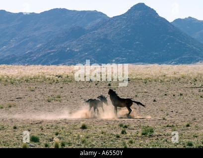 Un cheval sauvage à l'habitation du désert Garub Pan qui est situé sur le bord de la plus grande du sud-ouest de Banque D'Images