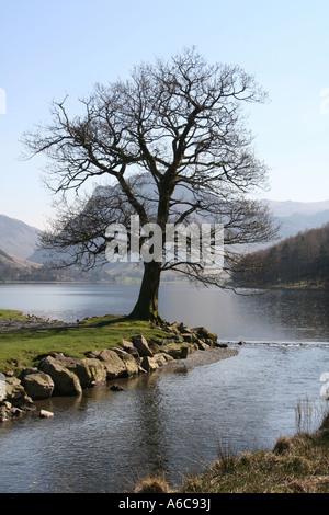 Arbre isolé sur le bord de la Lande, Lake District, Cumbria Banque D'Images