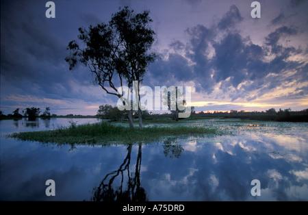 Les eaux jaune à l'aube Kadadu Australie Parc National des Territoires du Nord Banque D'Images