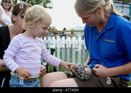 L'omble est aimé par une petite fille dans la ferme familiale à l'automne rhs flower show malvern Royaume-Uni 06 worcestersire