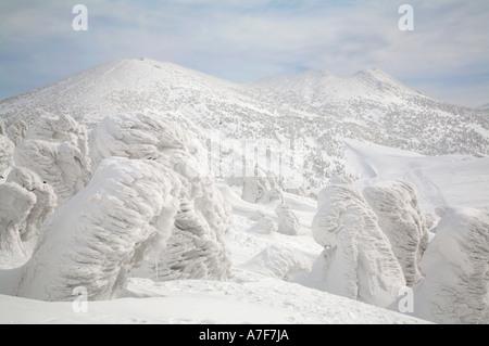 Monstres de neige - Arbres de neige bloqué sur d'eux en hiver Mont Hakkoda Japon Banque D'Images