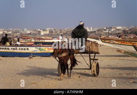 Panier cheval transportant du poisson sur la plage pêche Sénégal Dakar Yoff Banque D'Images
