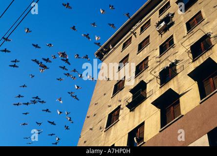 Les pigeons voler au-delà d'un bâtiment urbain en Chine Banque D'Images
