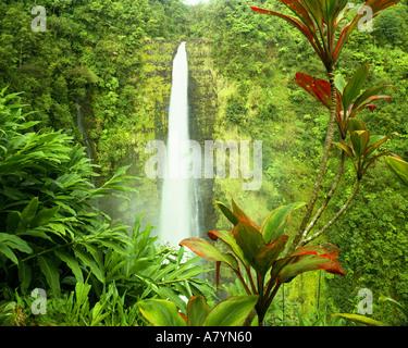 USA - HAWAÏ: Akaka Falls sur Big Island Banque D'Images