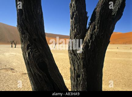 Dead Vlei Salt Pan, Sossusvlei, Namibie Banque D'Images