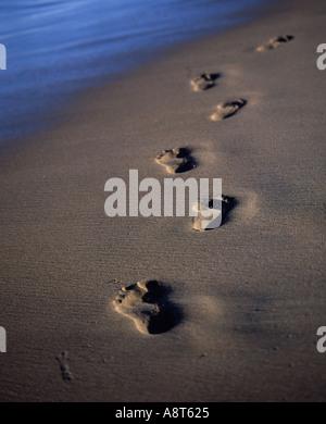 Pied nu dans le sable s'éloignant de l'empreinte Banque D'Images
