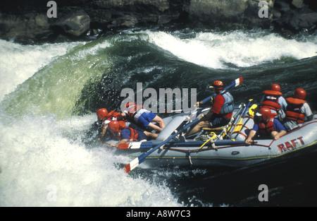Rafting sur le fleuve Zambèze, près de Victoria Falls dans le parc national du Zambèze Zimbabwe Afrique Banque D'Images