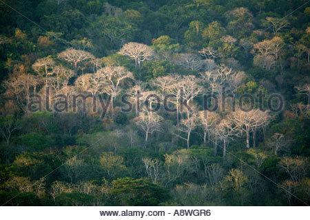 Dans la forêt tropicale du parc national de Soberania, près de Gamboa, République du Panama. Banque D'Images