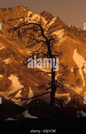USA Alaska Denali National Park Setting sun lights de l'Alaska contreforts près de col de Sable au début de l'été Banque D'Images
