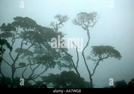 Brouillard dense dans la forêt tropicale de Pirre montagne dans le parc national de Darien, province de Darién, République du Panama.