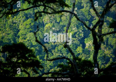 Et dense forêt tropicale vierge vu de Cerro Pirre dans le parc national de Darien, province de Darién, République du Panama.