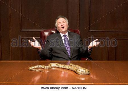 Businessman avec serpent python on conference table Banque D'Images