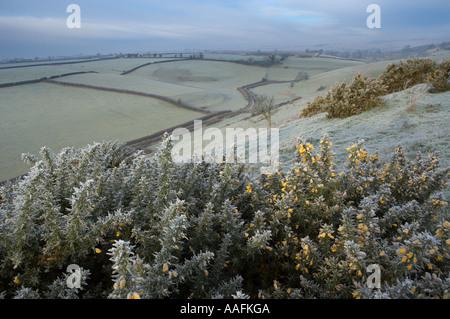Givre sur un matin d'hiver Poyntington Sherborne Dorset England UK nr Banque D'Images