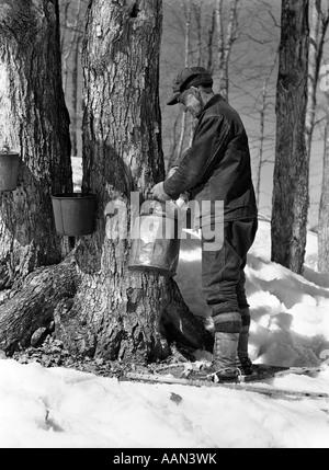 1930 1940 MAN TAPPING DE SUCRE D'ARBRES DANS LE MAINE Banque D'Images