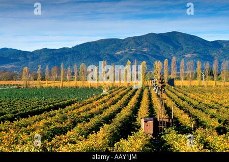 Ancien moulin du temps dans les vignobles de Napa Valley en Californie avec un ciel ensoleillé et couleurs d'automne Banque D'Images
