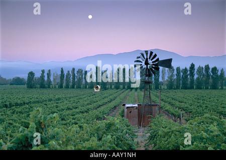 Vignobles dans la région viticole de la Napa Valley de Californie au lever du soleil avec vieux classique horizontale Banque D'Images