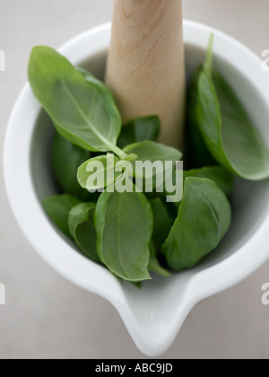 Les feuilles de basilic au mortier - haut de gamme image numérique Hasselblad 61Mo Banque D'Images