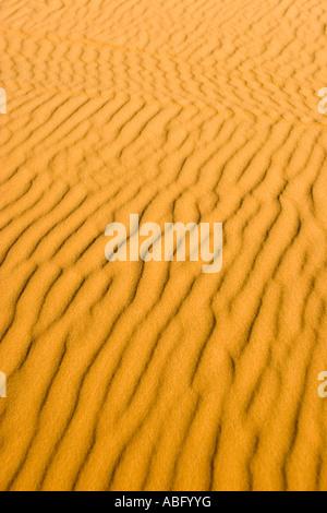 Les ondes à la dune de sable Sahara Erg Chebbi Maroc Banque D'Images