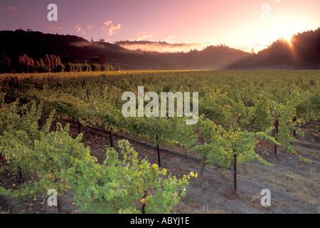 Aube sur vignoble dans la vallée de Napa le long de la piste de Californie Silverado Banque D'Images