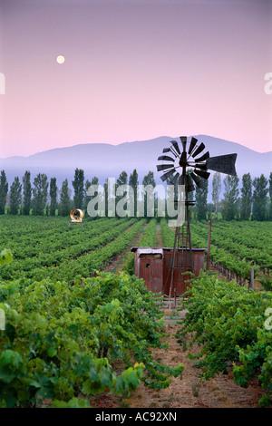 Ancien moulin du temps dans le pays du vin des vignobles de Californie du Nord au lever du soleil avec Harvest Moon Banque D'Images