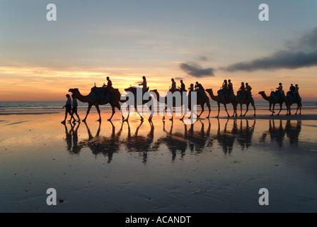 Caravane de chameaux, Cable Beach, Broome, Australie occidentale, Kimberlys
