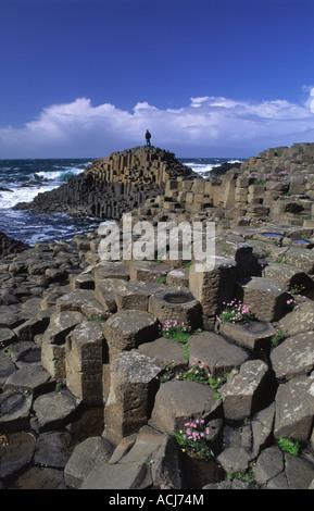 Personne sur la colonnes de basalte hexagonal de la Giant's Causeway, le comté d'Antrim, en Irlande du Nord. Banque D'Images