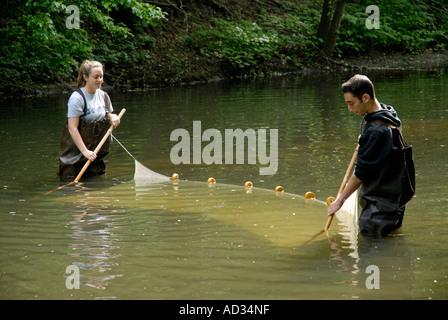 Teenage boy and girl à l'aide de la senne à l'échantillonnage des poissons en rivière Banque D'Images