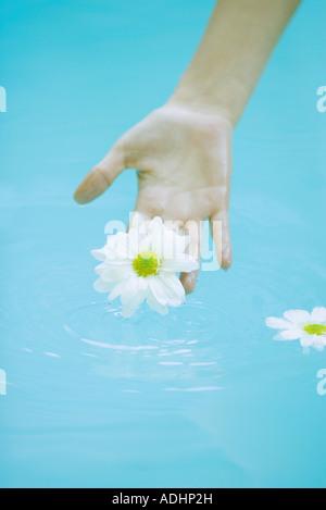 Young woman touching daisy flottant sur l'eau de surface Banque D'Images