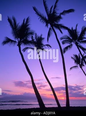 Palmiers et d'observation de coucher de Launiupoko Hawaii Banque D'Images