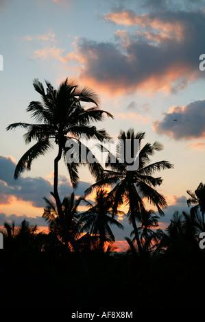 Lever du soleil vu à travers les cocotiers sur la côte du Mozambique Banque D'Images