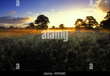 L'aube dans le champ près de Longburton Dorset UK Banque D'Images