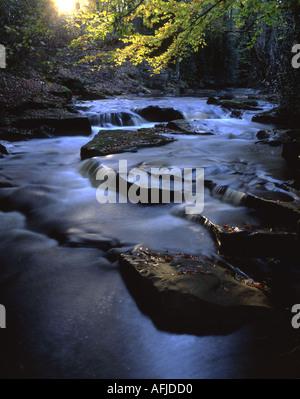 L'automne sur la rivière South Yorkshire Rivelin Grande-bretagne, Royaume-Uni Banque D'Images