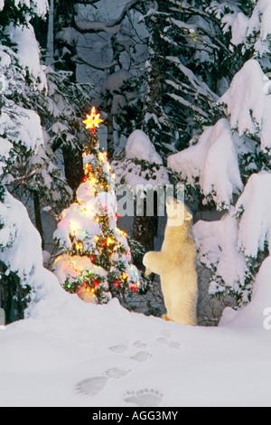 Polar Bear cub debout sur ses pattes à la star sur arbre de Noël dans la forêt Hiver Alaska Composite Banque D'Images