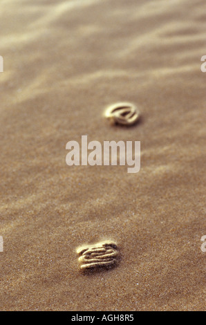Excrété-d'un sandworm
