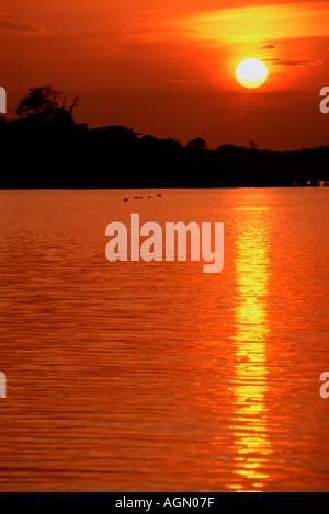 Coucher du soleil sur le lac Januaca Amazonas Brésil Banque D'Images
