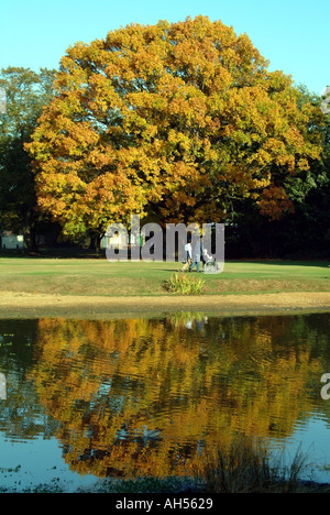 Commune Shenfield Brentwood l'étang avec l'Oak tree & automne couleur réflexions Essex England UK Banque D'Images