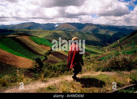 Les gens de l'agriculture l'homme près de la Province de Cotopaxi Zumbahua Amérique du Sud Équateur Banque D'Images