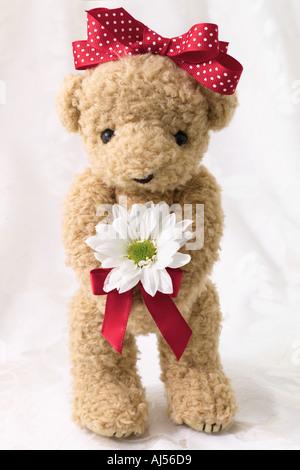 Valentin ours avec Daisy Banque D'Images