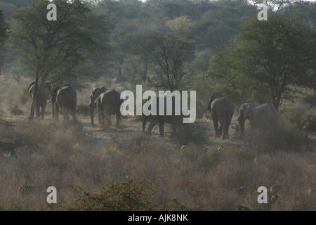 Ligne d'éléphants marchant dans la poussière Banque D'Images